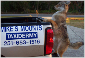 Where Is Kyle Mikes Mount Taxidermy